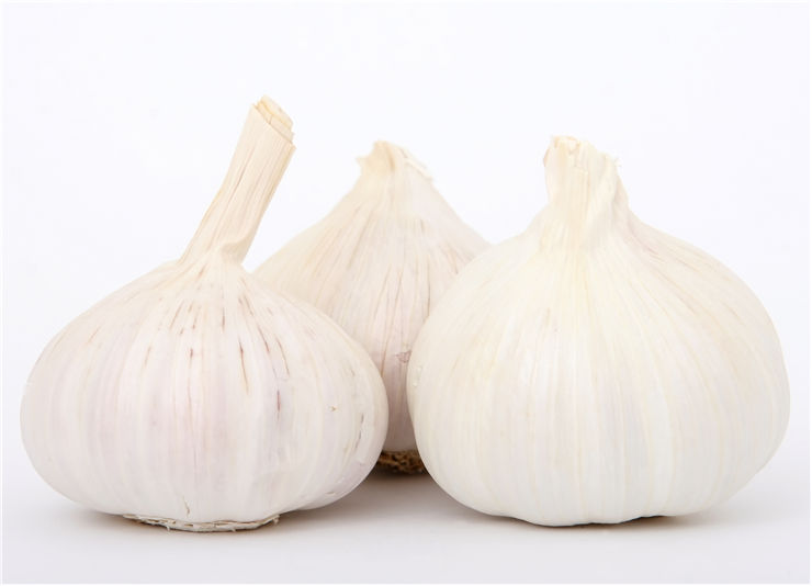Picture Of Vampires And Garlic